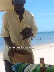 Live turtles for sale