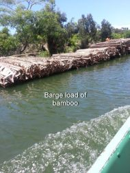 Loaded barge of bamboo