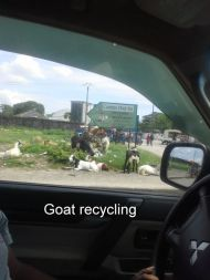 Goat recycling